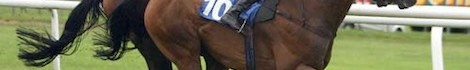 winning-race-horse